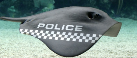 news-police-stingray